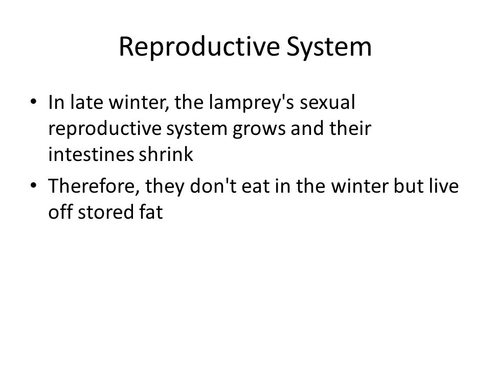 Reproductive System In late winter, the lamprey s sexual reproductive system grows and their intestines shrink.