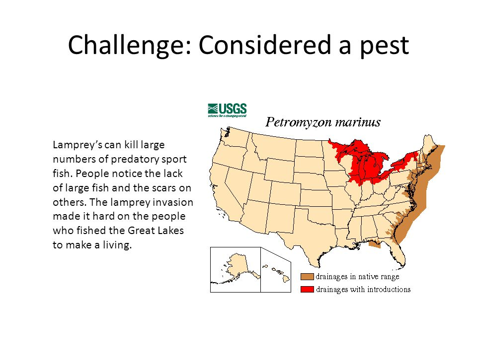 Challenge: Considered a pest