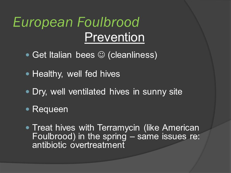 European Foulbrood Prevention Get Italian bees  (cleanliness)
