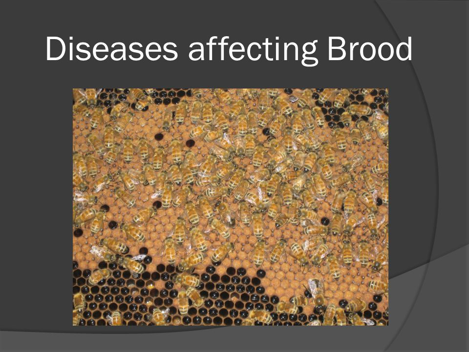 Diseases affecting Brood