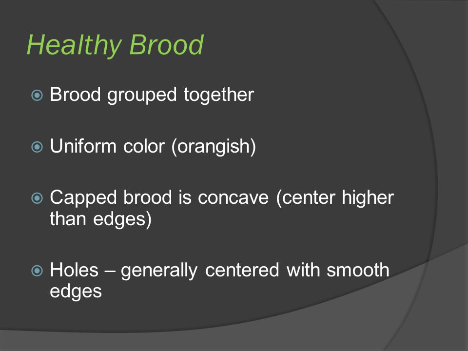 Healthy Brood Brood grouped together Uniform color (orangish)