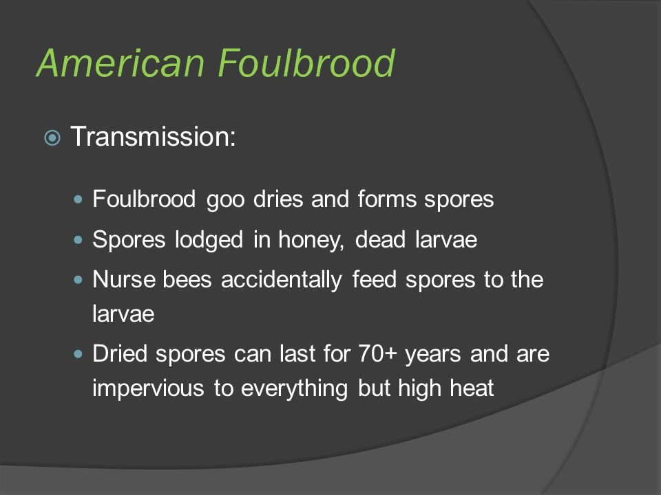 American Foulbrood Transmission: Foulbrood goo dries and forms spores