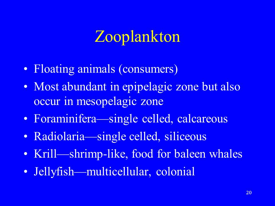 Zooplankton Floating animals (consumers)