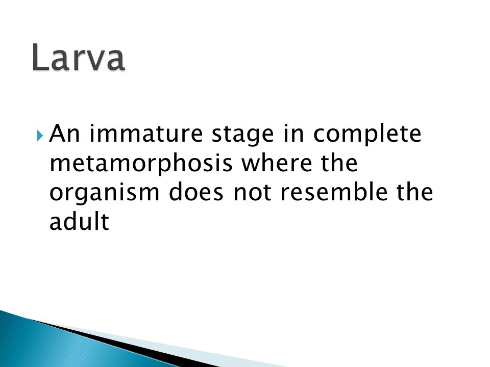 Larva An immature stage in complete metamorphosis where the organism does not resemble the adult