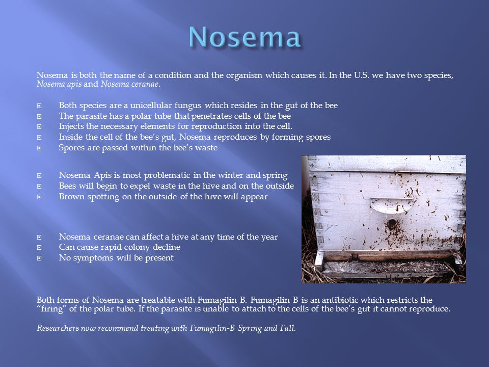 Nosema Nosema is both the name of a condition and the organism which causes it. In the U.S. we have two species, Nosema apis and Nosema ceranae.