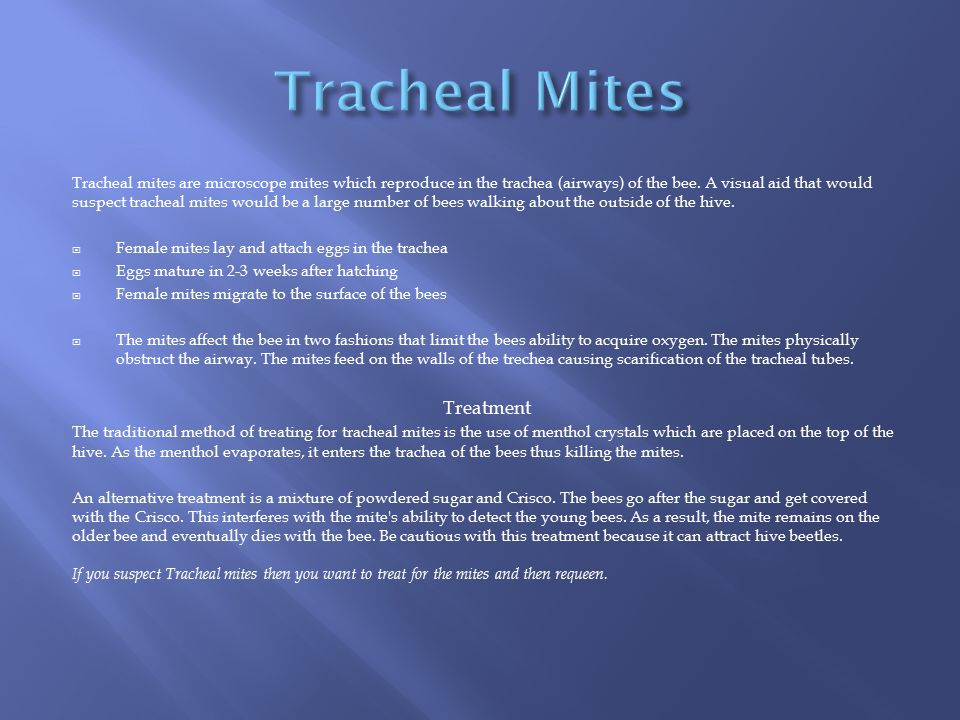 Tracheal Mites Treatment