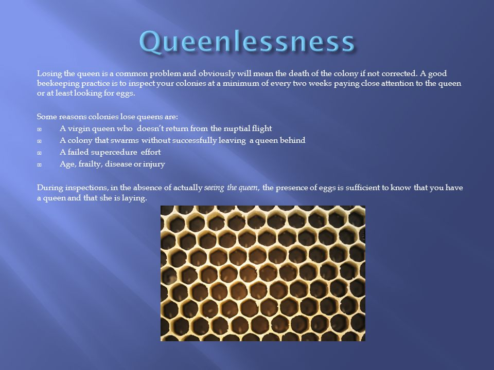 Queenlessness