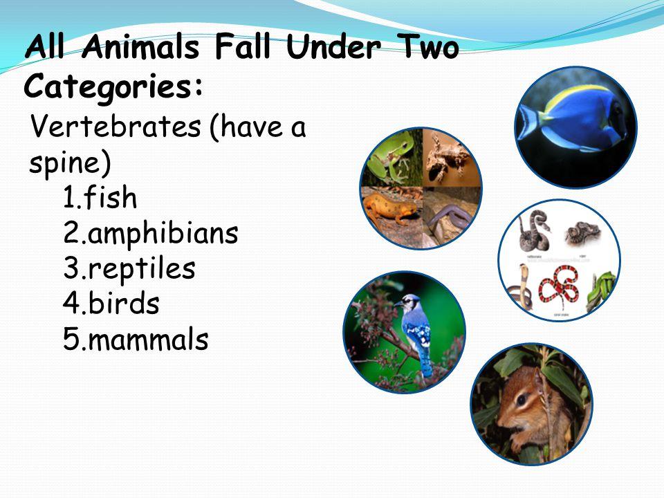 All Animals Fall Under Two Categories: