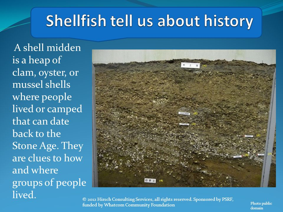 Shellfish tell us about history