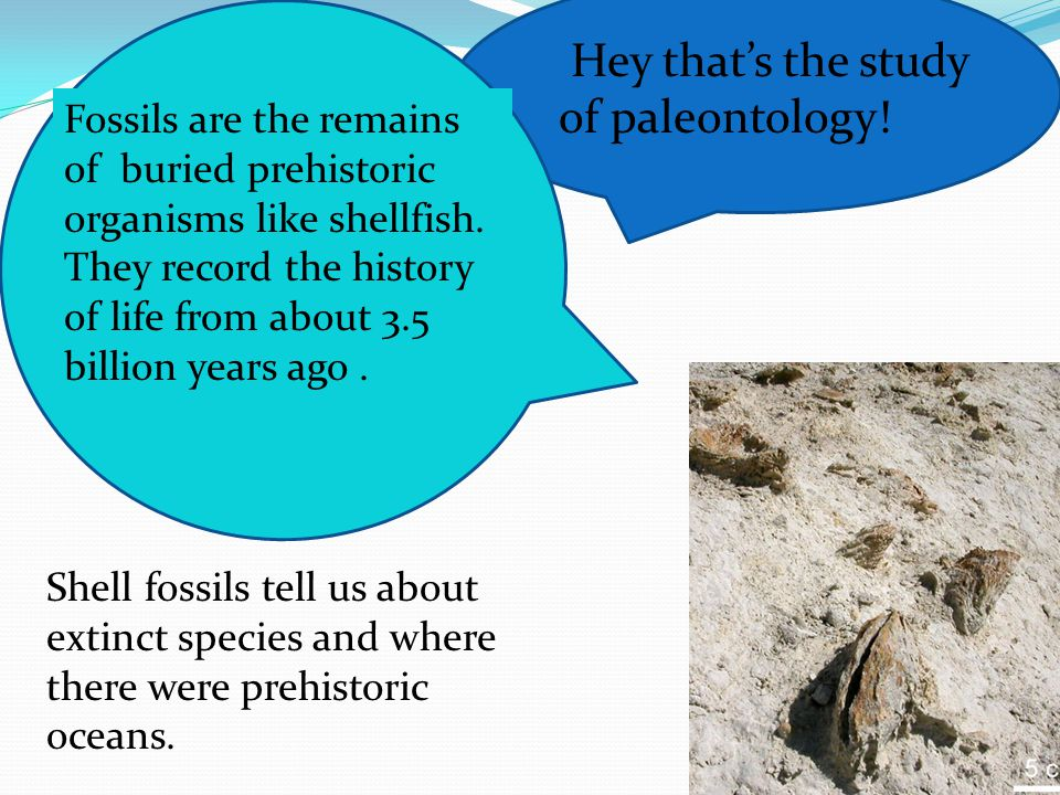 Hey that's the study of paleontology!