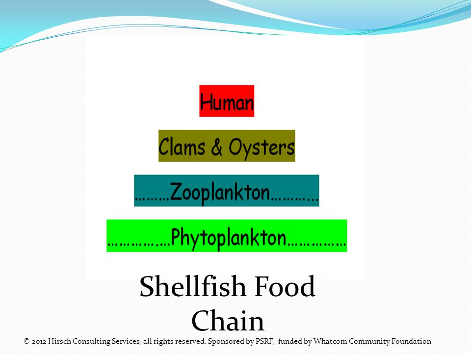 Shellfish Food Chain © 2012 Hirsch Consulting Services, all rights reserved.