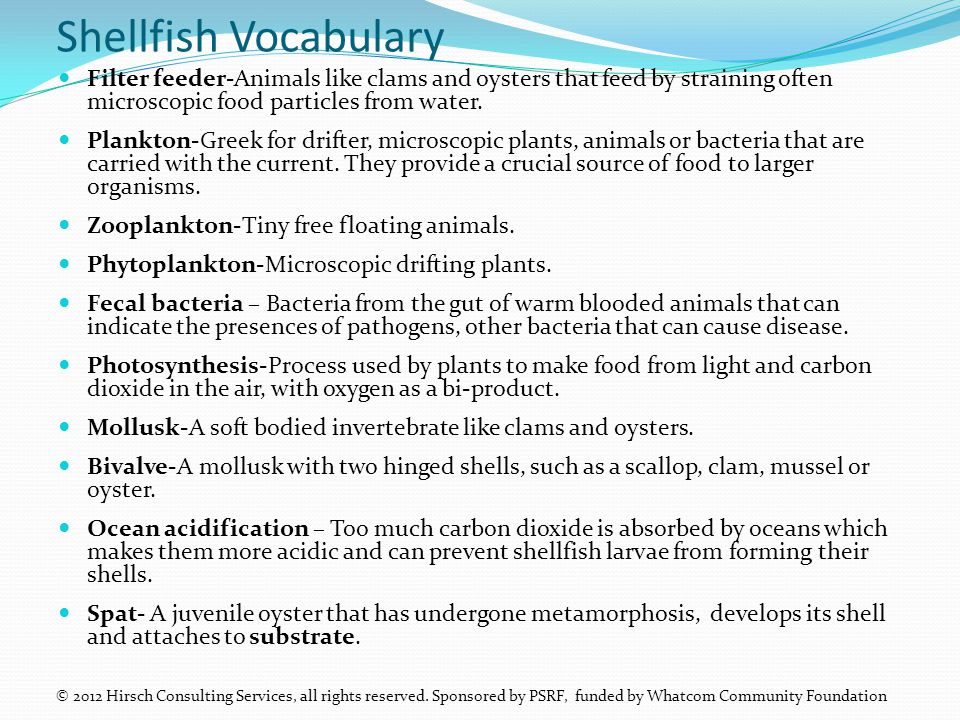Shellfish Vocabulary Filter feeder-Animals like clams and oysters that feed by straining often microscopic food particles from water.