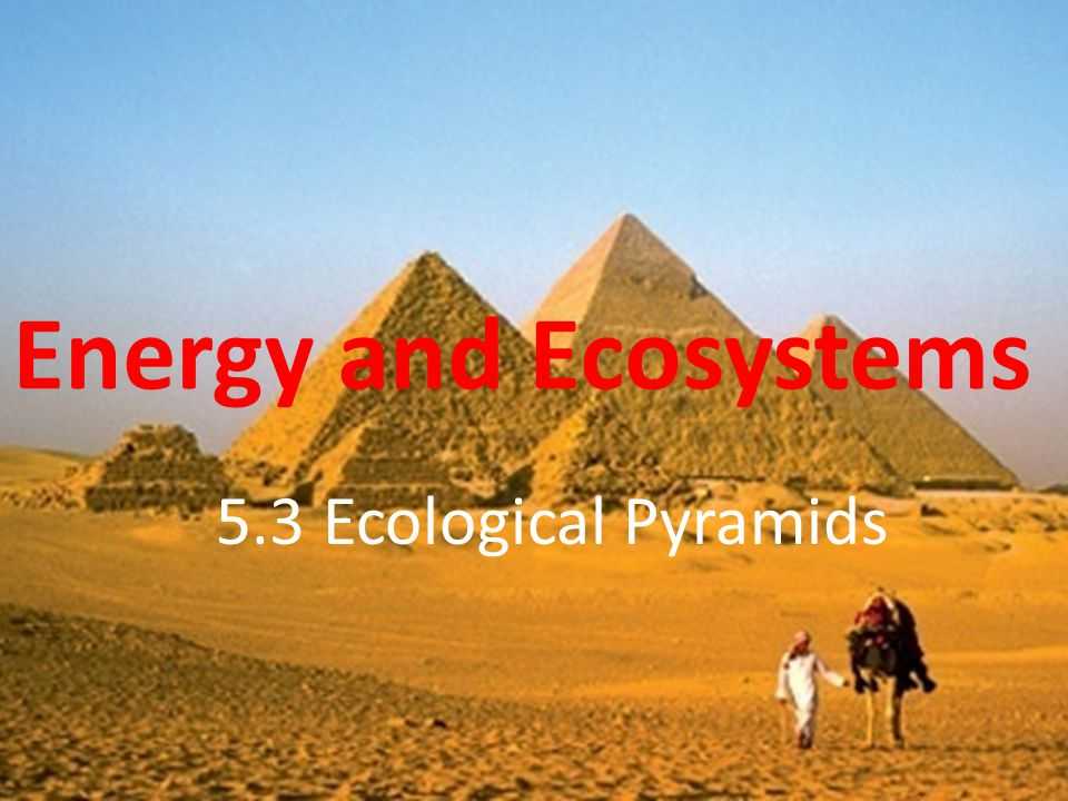 Energy and Ecosystems 5.3 Ecological Pyramids