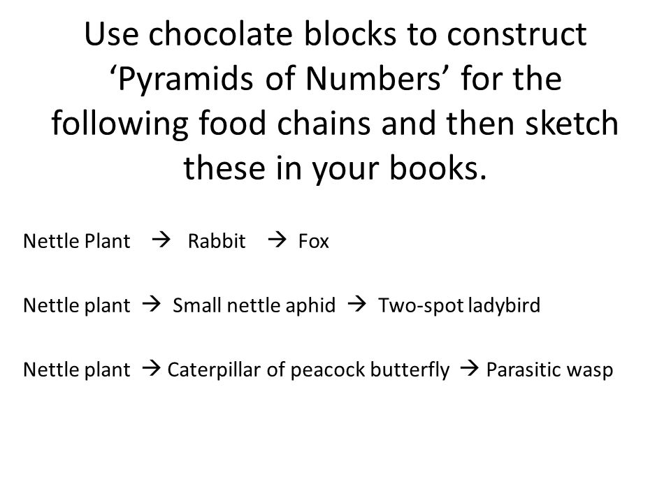 Use chocolate blocks to construct 'Pyramids of Numbers' for the following food chains and then sketch these in your books.