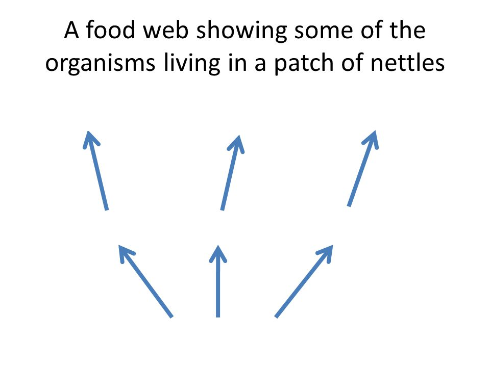 A food web showing some of the organisms living in a patch of nettles