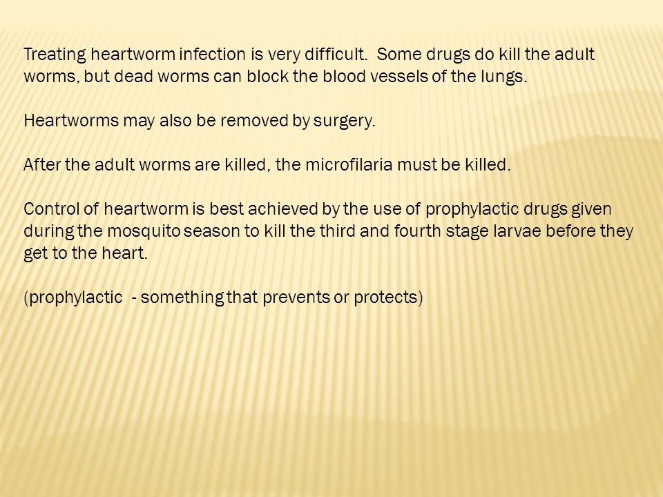 Treating heartworm infection is very difficult