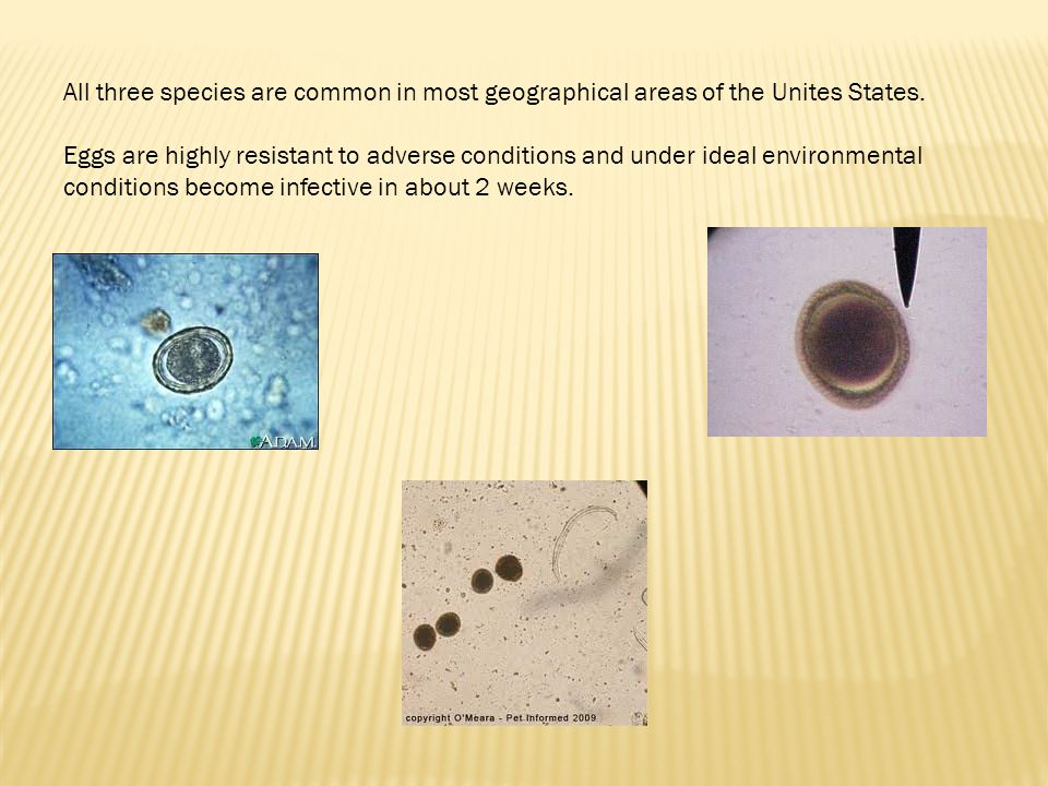 All three species are common in most geographical areas of the Unites States.