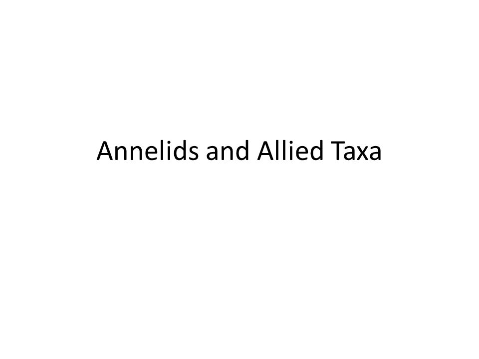 Annelids and Allied Taxa
