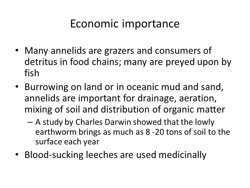 Economic importance Many annelids are grazers and consumers of detritus in food chains; many are preyed upon by fish.