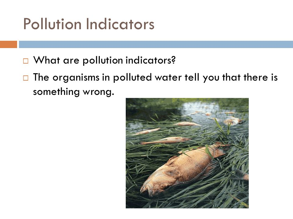Pollution Indicators What are pollution indicators