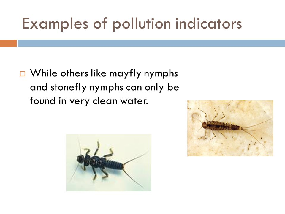 Examples of pollution indicators