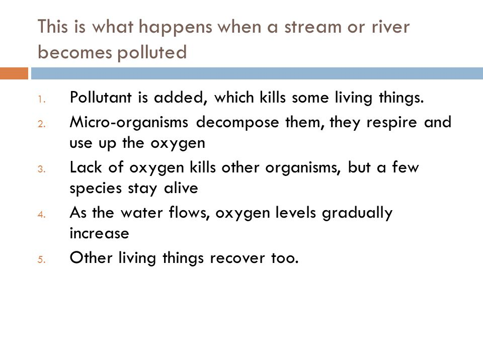 This is what happens when a stream or river becomes polluted