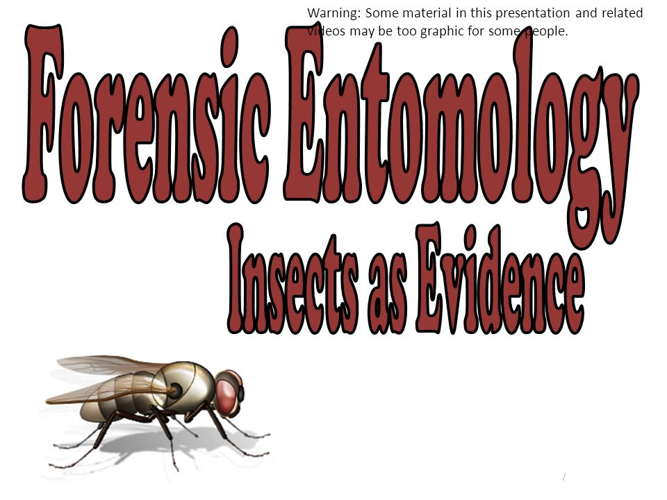 Forensic Entomology Insects as Evidence