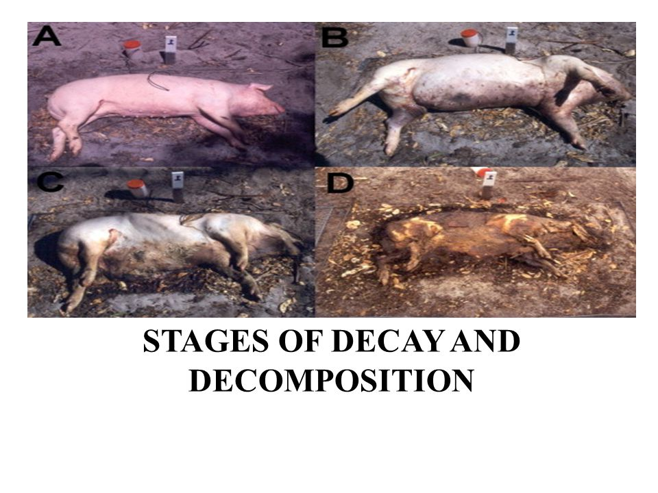 Stages of Decay and decomposition