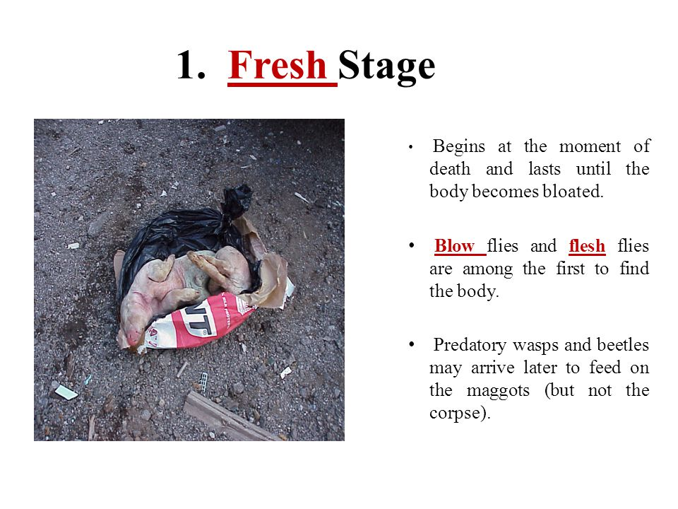 1. Fresh Stage Begins at the moment of death and lasts until the body becomes bloated.