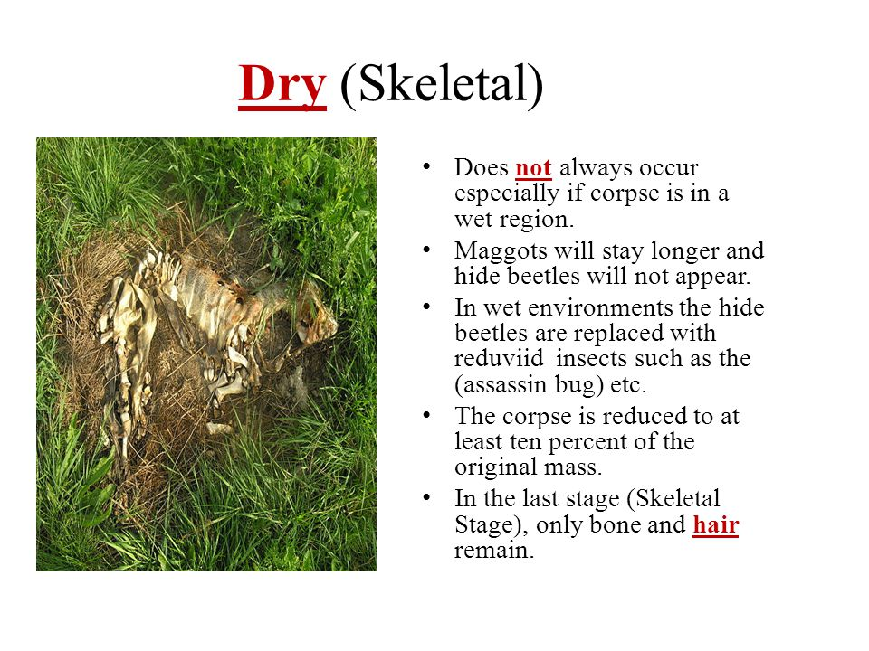 Dry (Skeletal) Does not always occur especially if corpse is in a wet region. Maggots will stay longer and hide beetles will not appear.