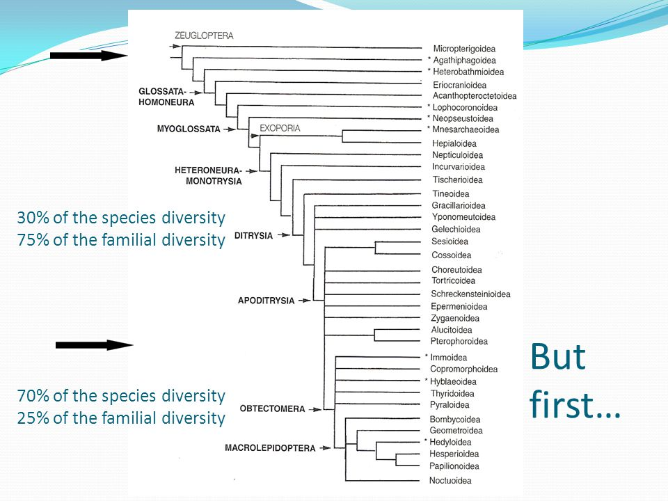 70% of the species diversity 25% of the familial diversity