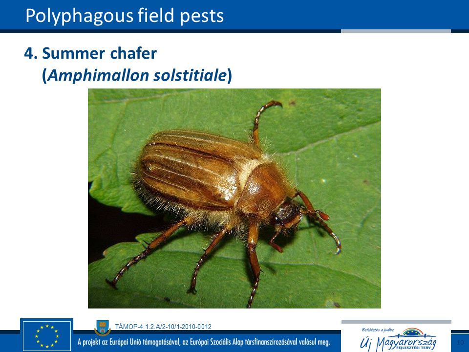 Polyphagous field pests