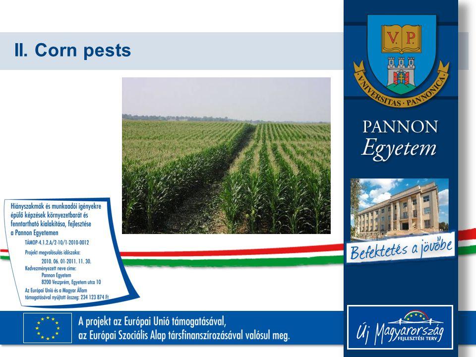 II. Corn pests