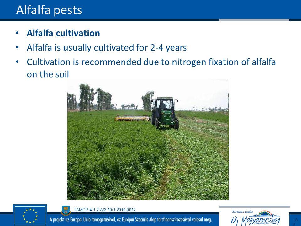 Alfalfa pests Alfalfa cultivation