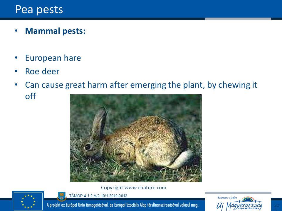 Pea pests Mammal pests: European hare Roe deer