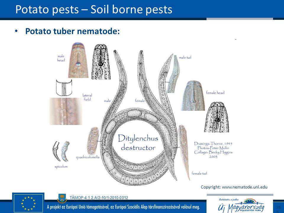 Potato pests – Soil borne pests