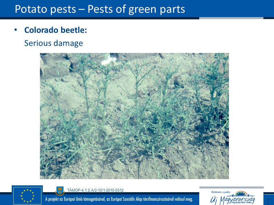 Potato pests – Pests of green parts