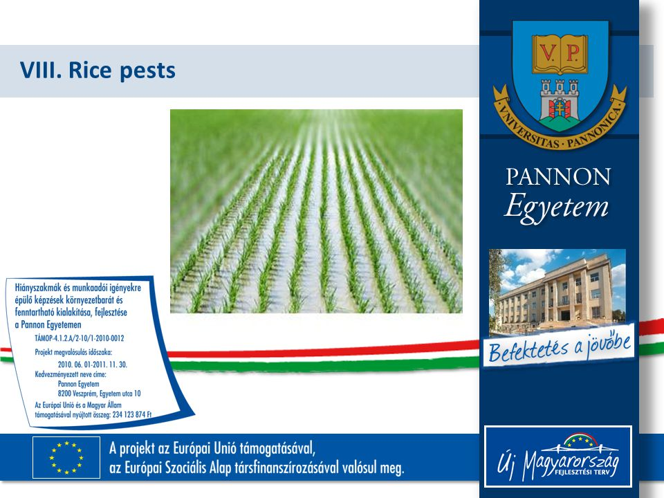 VIII. Rice pests