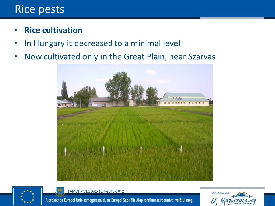 Rice pests Rice cultivation In Hungary it decreased to a minimal level