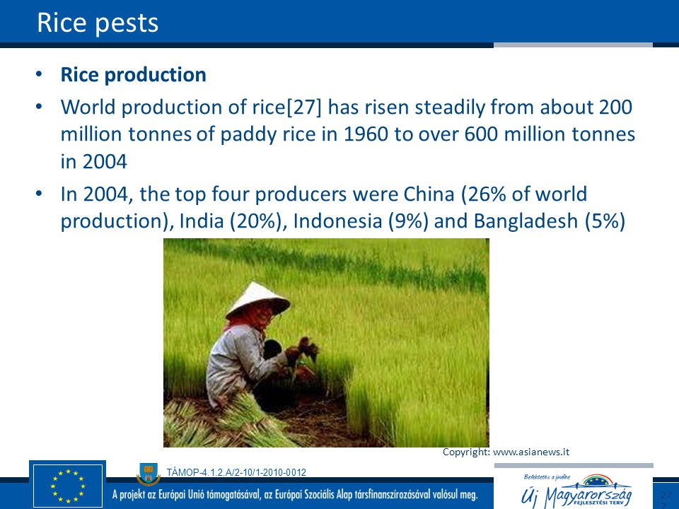 Rice pests Rice production