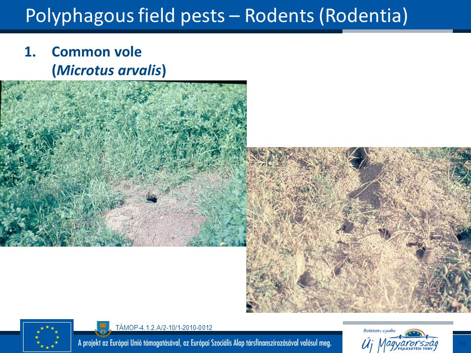 Polyphagous field pests – Rodents (Rodentia)