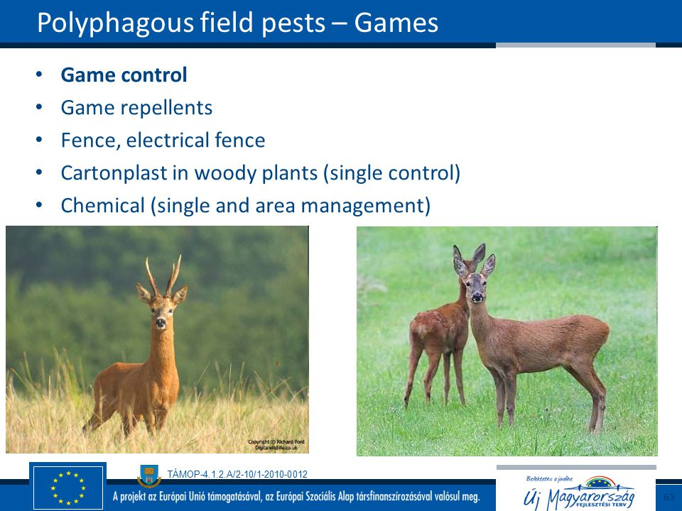 Polyphagous field pests – Games