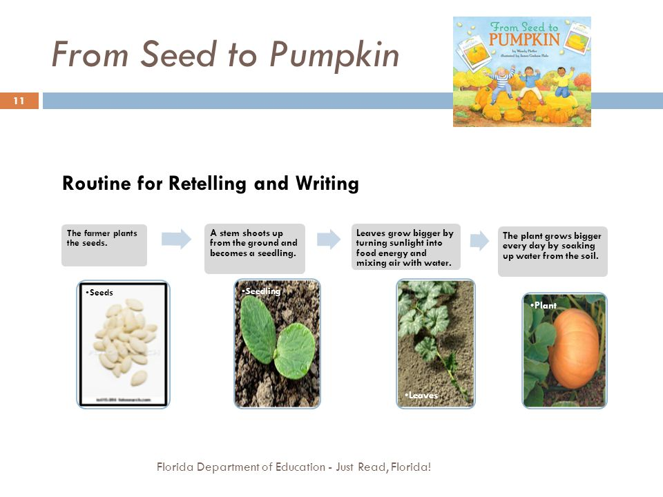 From Seed to Pumpkin Routine for Retelling and Writing
