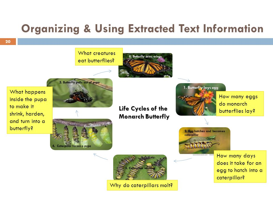 Organizing & Using Extracted Text Information