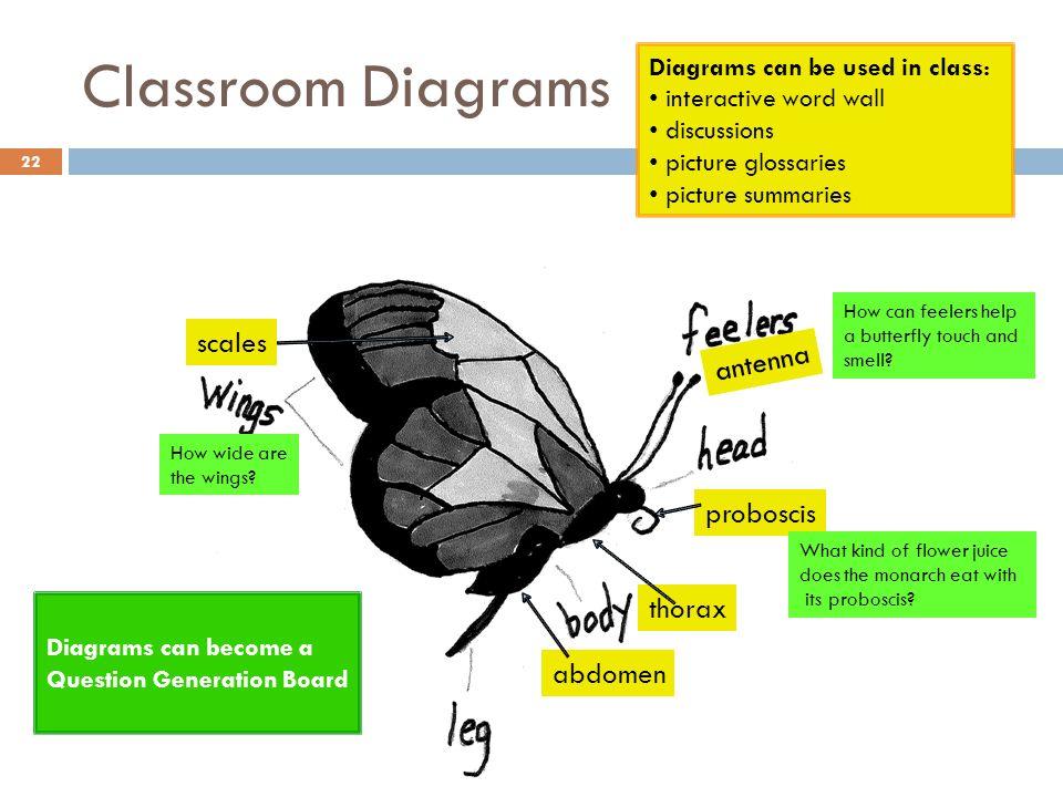 Classroom Diagrams scales antenna proboscis thorax abdomen