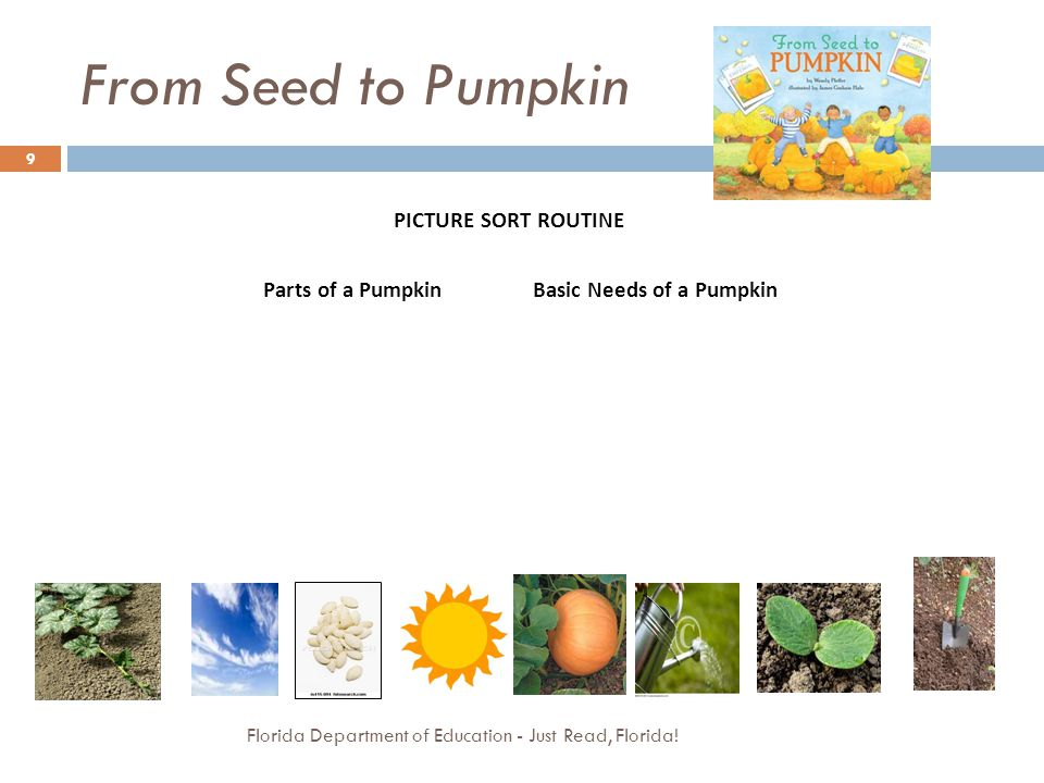 From Seed to Pumpkin PICTURE SORT ROUTINE Parts of a Pumpkin