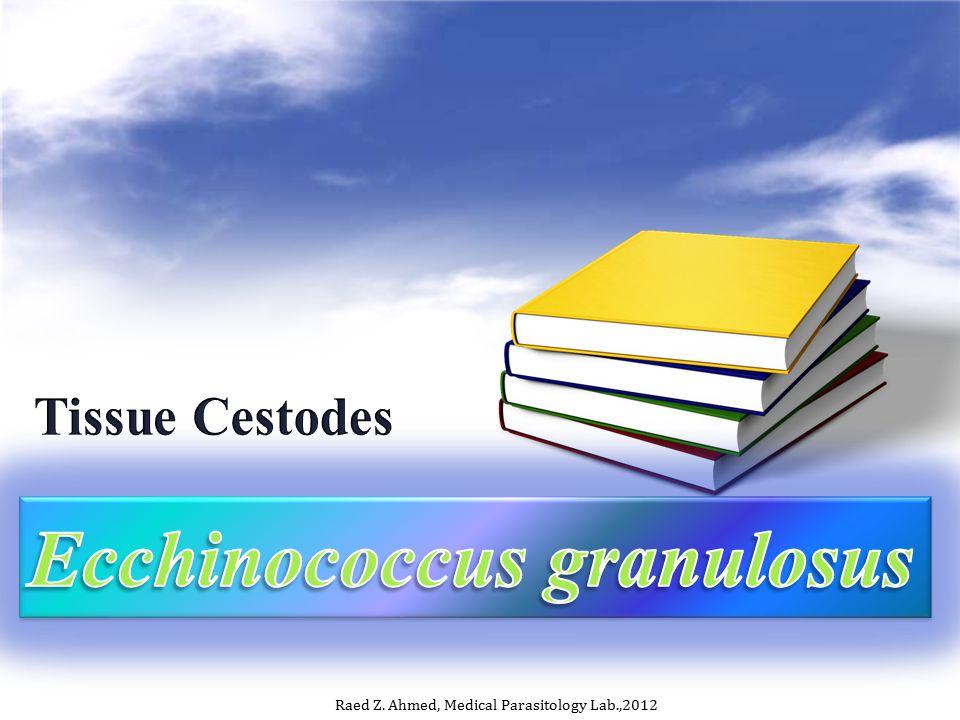 Ecchinococcus granulosus