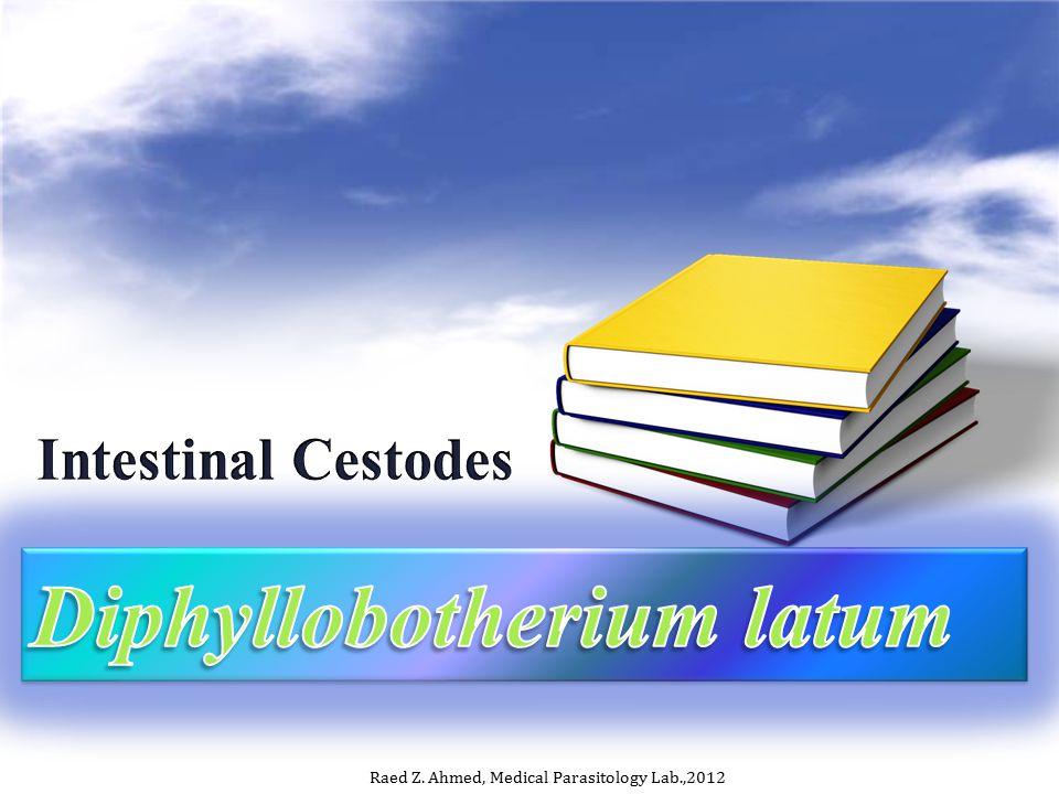 Diphyllobotherium latum