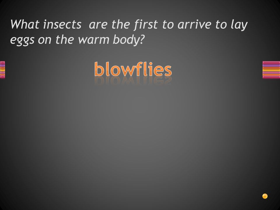 What insects are the first to arrive to lay eggs on the warm body