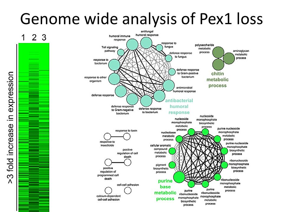 Genome wide analysis of Pex1 loss